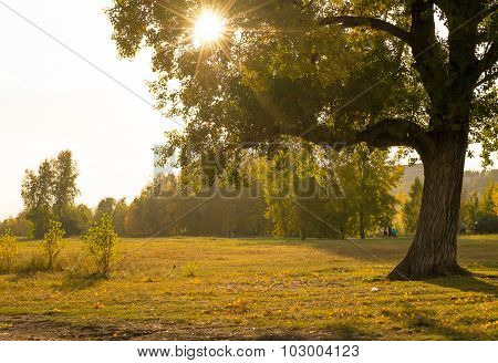 The light of the sun through the branches