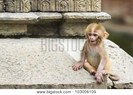 Cute monkey forest child