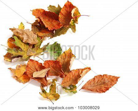 Autumn Dried Leafs