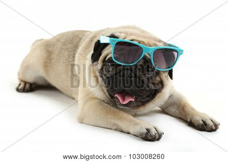 Funny Pug Dog With Sunglasses Isolated On A White