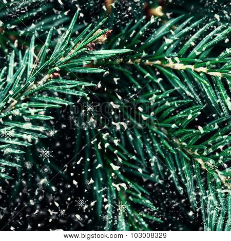 Fir Tree Branch With Snowflakes As Background Close Up. Christmas Tree Pine Branches With White Snow