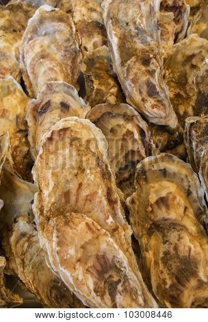 Rows Of Oysters