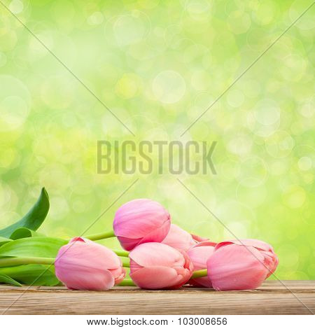 Bouquet of  Beautiful  Pink Tulips on green defocused holiday background, big size