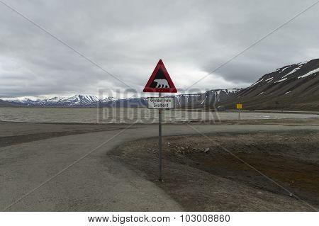 Polar bear crossing