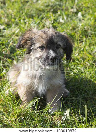 brown mongrel dog