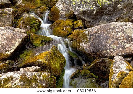 Mountain Stream Flowing Among The Mossy Stones.