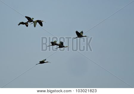 Flock Of White-faced Ibis Flying In A Blue Sky