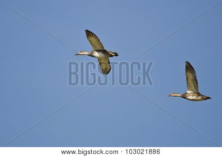 Two Gadwall Flying In A Blue Sky