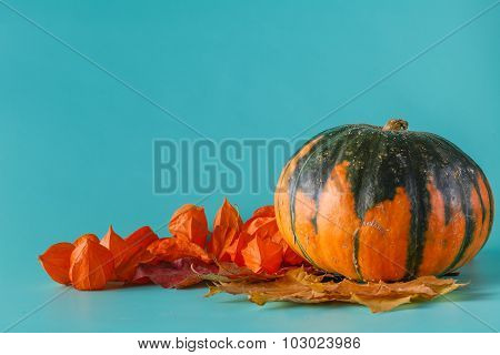 Colored Pumpkin On Aquamarine Shadowless Background