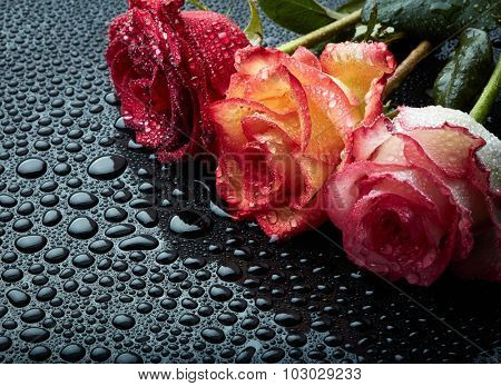 Roses on black background with waterdrops