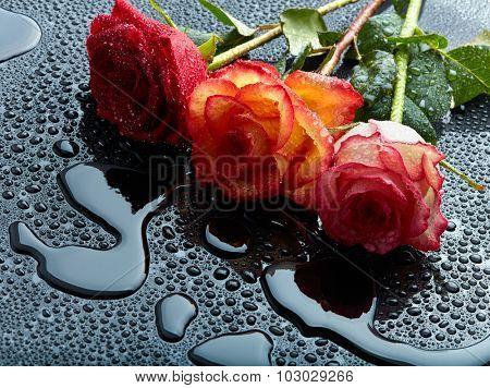 Three roses on black wet background