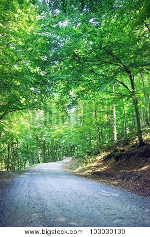 Mountain forest road