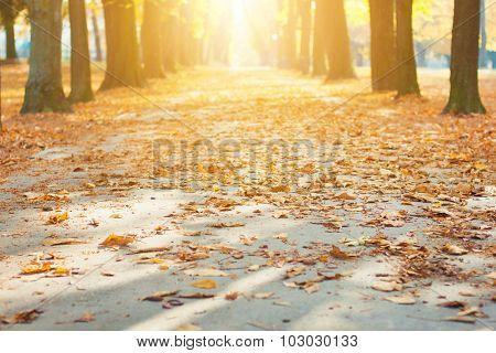 Park path in autumn sun