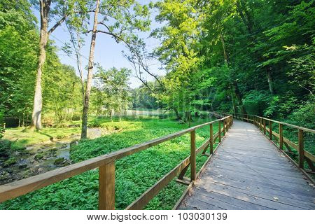 Wooden path in the nature