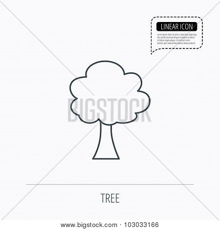 Tree icon. Forest wood sign.
