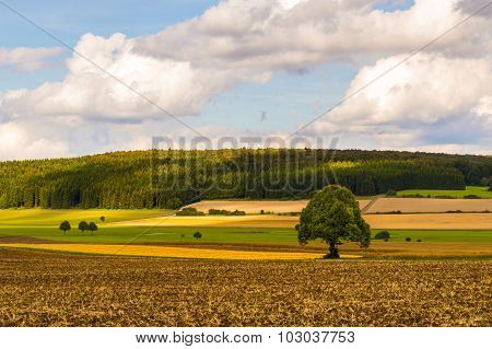 A Tree In A Crops Field