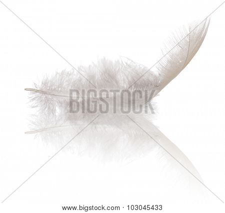 single feather isolated on white background