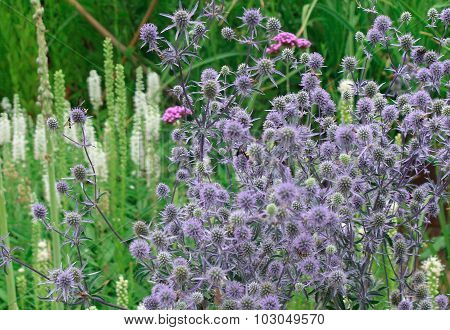 Field of Purple with Bee Polinating