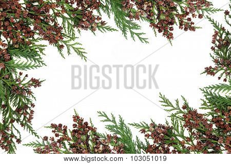 Cedar cypress abstract border with pine cones over white background.