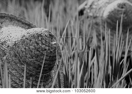 Rice Farmers Malaysia Crop Plantation Straw Hat Concept