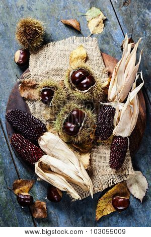 Autumn concept with Chestnuts and corn on wooden board