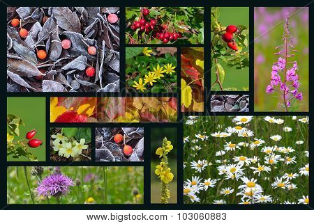 Four Seasons of Colour Collage