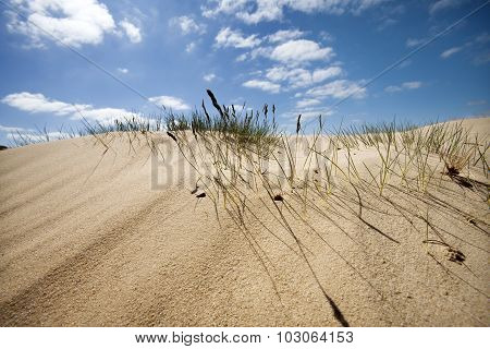 Sand Dune With Some Grass