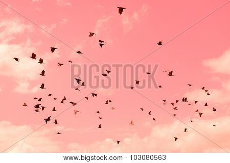 Pigeons were flying in the pink sweet sky.