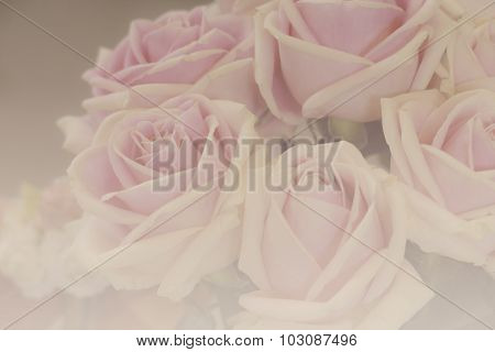 Bunch Of Pink Rose With Soft Focus And Color Filter