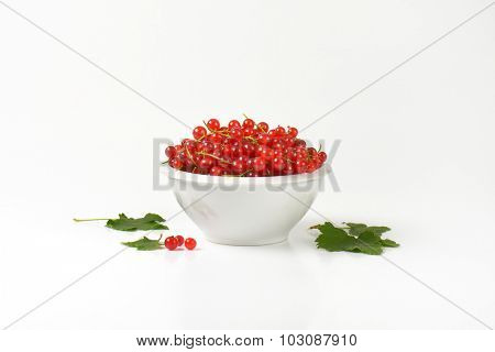 white bowl full of fresh red currant