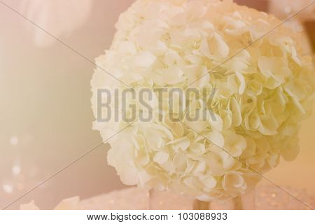 Bunch Of White Hydrangea With Soft Focus And Color Filter
