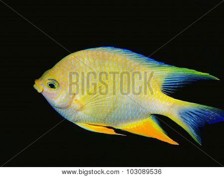 Coral fish, Island Bali,  Pemuteran