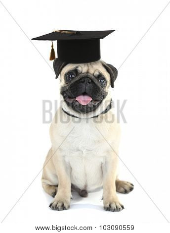 Cute dog  with grad hat isolated on white - education concept
