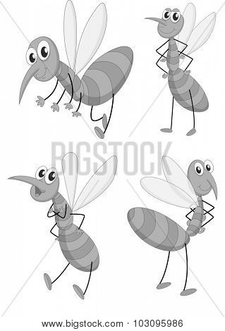 Mosquito in four different poses illustration