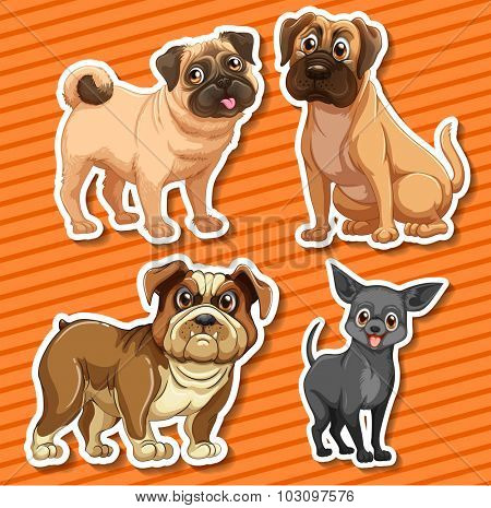 Small breeds dogs on orange background illustration