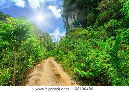 Ground rural road with tropical plants and blue sky with white clouds and sunshine