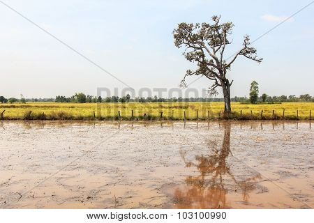 View paddy fields in rural a beautiful of Thailand