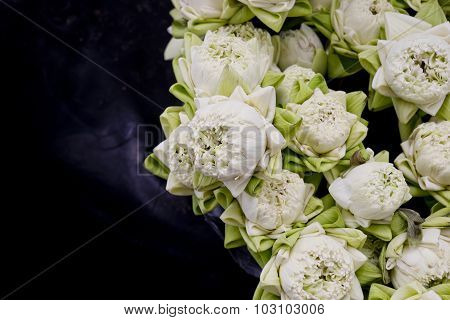 Floristry White Lotus Flowers In Vase.