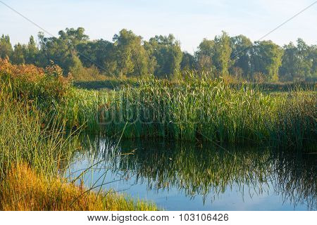 Shore of a lake below a hazy sky in autumn