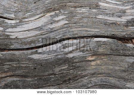 Lodgepole Pine Wood