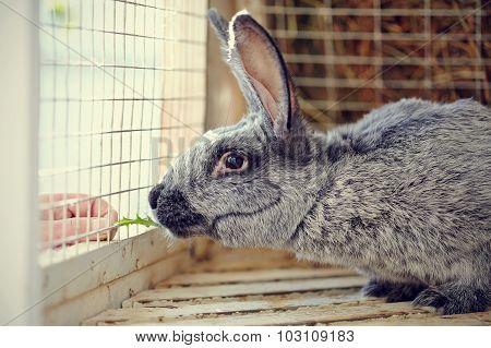 Portrait Of A Gray Rabbit