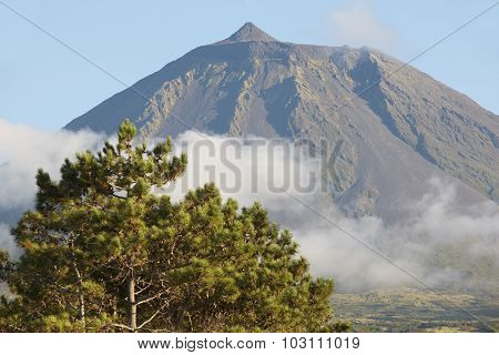 Azores Landscape In Pico Island. Pico Peak And Pine. Portugal