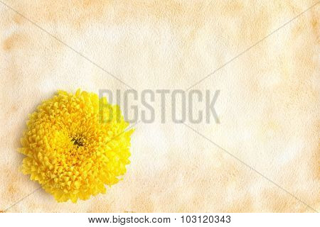 Chrysanthemum Flower On Vintage Paper