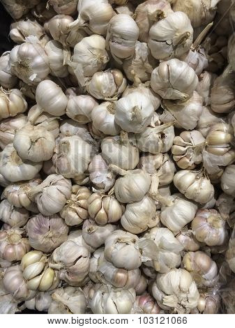 Many Garlic herb bulb high vitamin and good for health