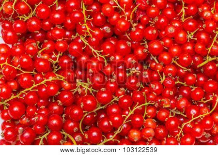Background made of red currant berries