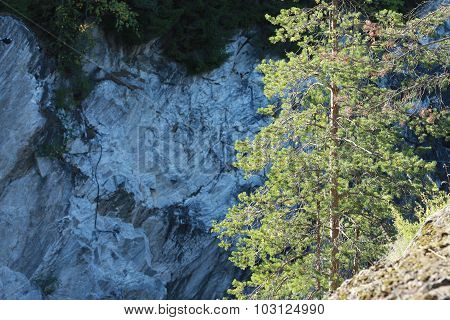 Lonely tree on a cliff. Trees and rocks