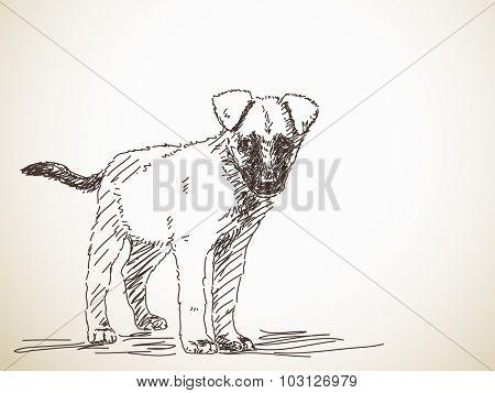 Sketch of puppy dog, Hand drawn vector illustration
