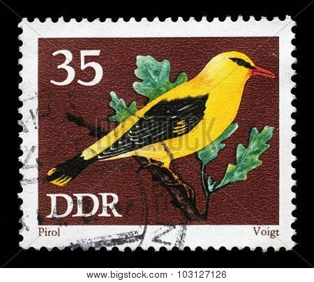 GDR-CIRCA 1973: A stamp printed in GDR shows bird Eurasian golden oriole (Oriolus oriolus) from the series Protected Songbirds, circa 1973.