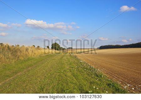Harvest Agricultural Scene