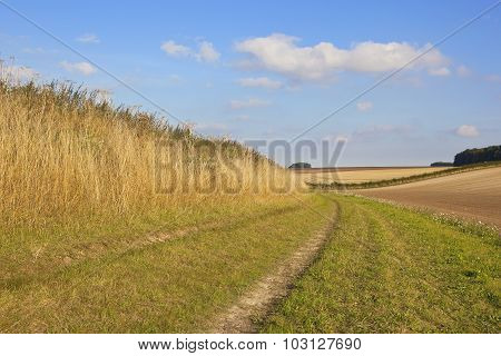CCountry Walking In The Yorkshire Wolds